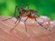 zanzara morbo di keystone